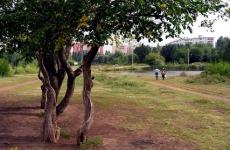 Воронежский парк «Дельфин» отдадут в частную собственность