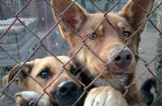 В Приамурье щенка выбросили из окна