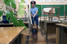 В Приамурье обнаружили тайник с 8 килограммами наркотиков
