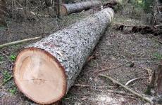 В Тюмени ужесточат ответственность за самовольную вырубку деревьев