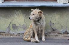 В Белгороде отремонтировали пансионат для бездомных животных