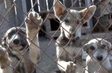 Прокуратурой Кольского района к организации, занимающейся отловом безнадзорных животных, приняты меры прокурорского реагирования