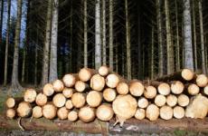Жители Демянского района осуждены за незаконную рубку леса в особо крупном размере