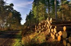 Определен перечень размещаемых в Интернете сведений о лесных декларациях из ЕГАИС учета древесины