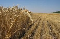 Уточнены условия предоставления земель сельхозназначения