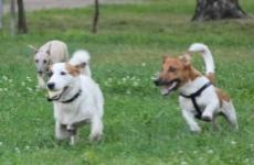 В Башкирии вступил в силу закон об ответственном обращении с животными