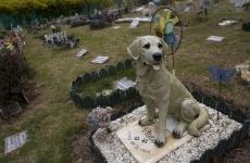 Виновник гибели животных в 3 микрорайоне «убил» съемную квартиру
