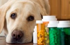 Индивидуальный предприниматель, продававший  ветеринарные препараты без лицензии привлечен к административной ответственности