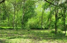 В Волгоградской области задумались о восстановлении защитных «зеленых поясов»