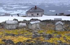 Заповедники Арктики введут единое пособие для мониторинга животных