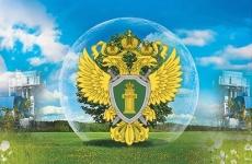 В Ленинградской области по инициативе прокуратуры возбуждено уголовное по факту нарушения экологического законодательства, с причинение вреда на сумму более 300 млн. рублей