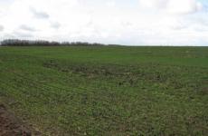 Жители всей страны уже через три недели смогут взять «дальневосточный гектар» в Хабаровском крае